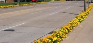 yellow and orange marigolds line the curbs along a four lane street