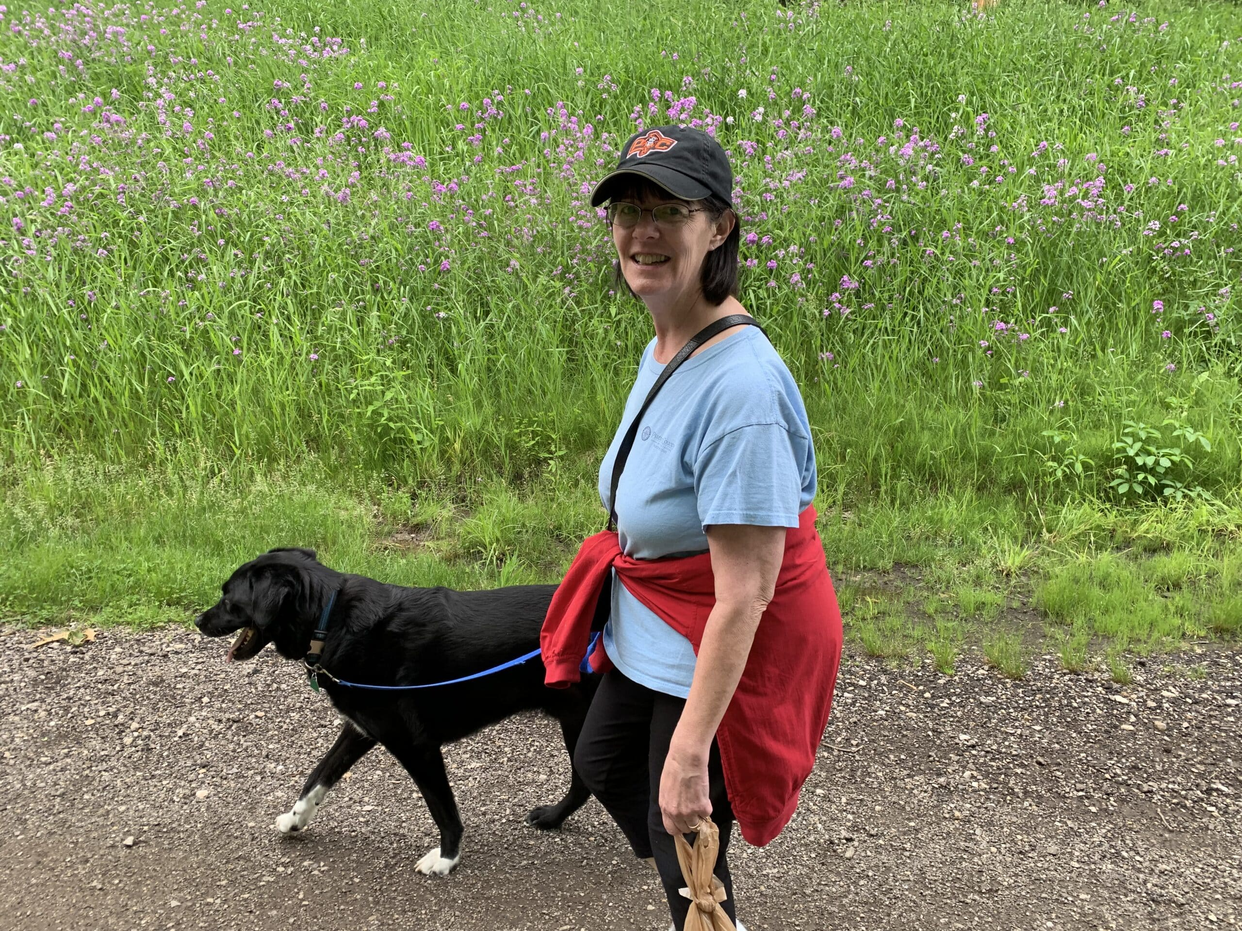 Woman walking large black dog with white socks on a trail with a filed of tiny purple flowers in background