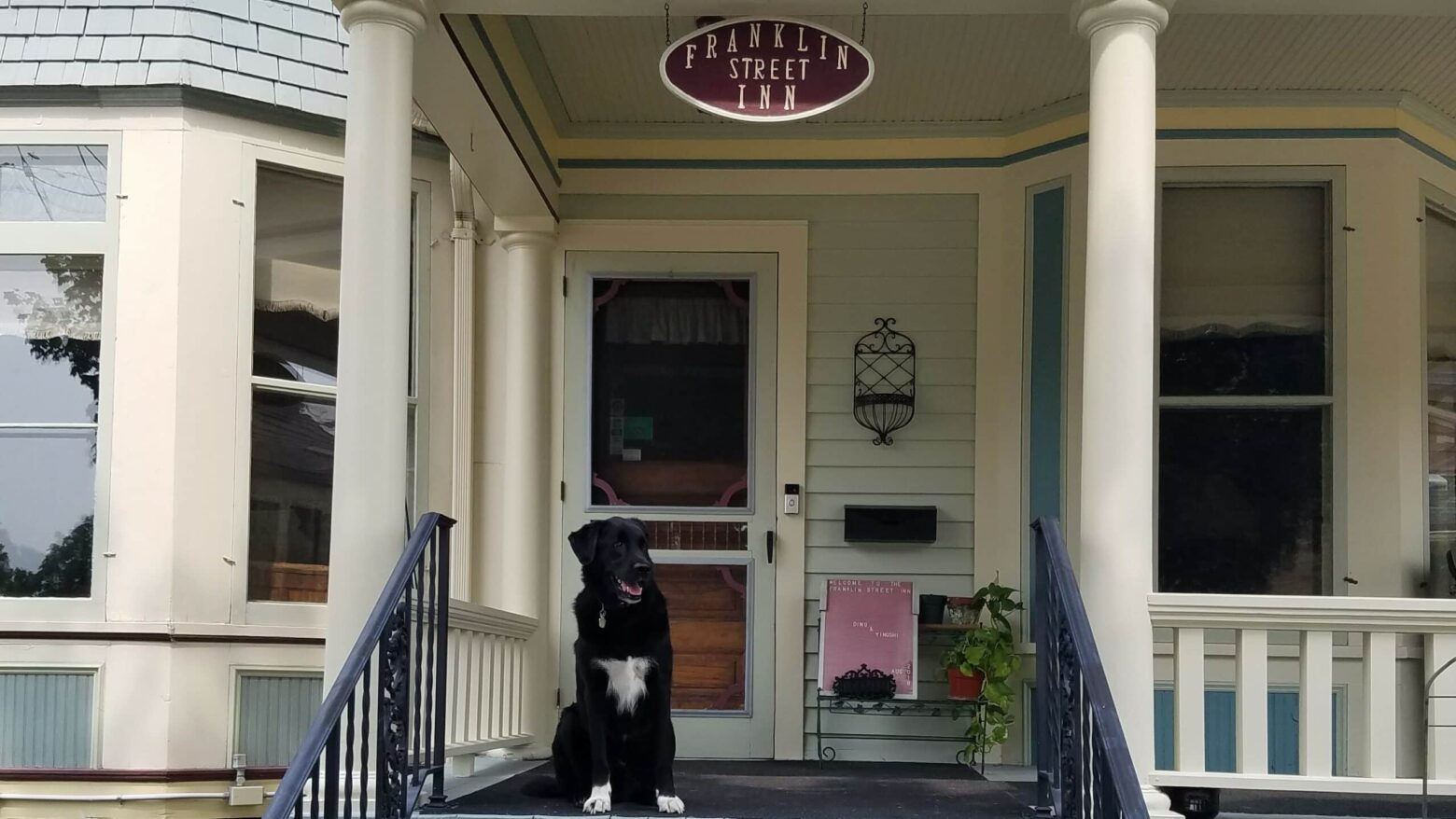 Large smiling black dog with white chest and white socks sits on Victorian home porch with front door in background. Looks like dog is waiting for someone while oval Franklin Street Inn sign hangs above dog.