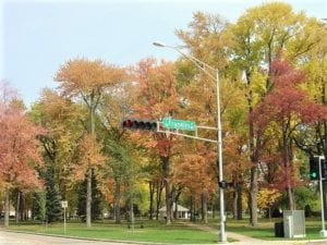 Trees in various autumn colors at City Park with Franklin Street sign on traffic light/street light post
