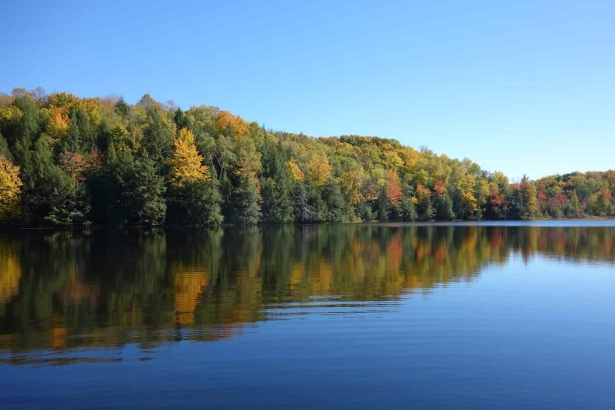 view of trees with fall foliage, view from calm lake