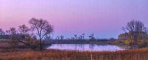 Magenta sunset over small lake and wetland area; swath of cattails in foreground and waterfowl dot the water