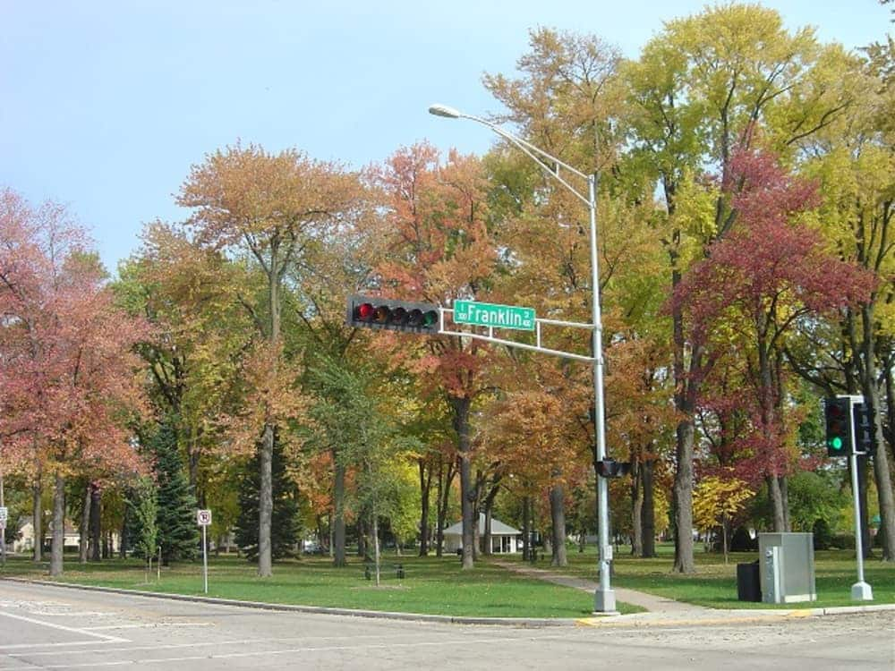 trees showing autumn colors
